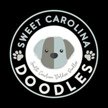 Golden Doodle Puppies South Carolina
