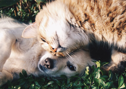 introducing your new puppy to your cat