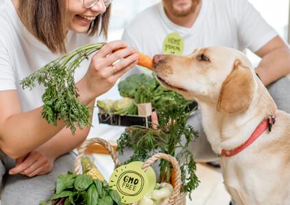 dog's diet