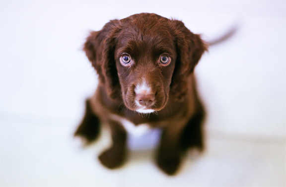 Training Your Puppy without hitting or yelling