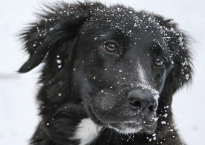 Preparing Your Dog For Snow