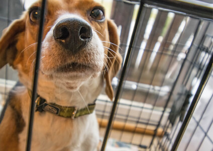 weaning your dog off the crate