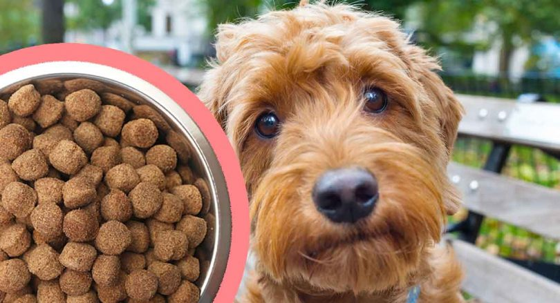 best-puppy-food-for-goldendoodles-long