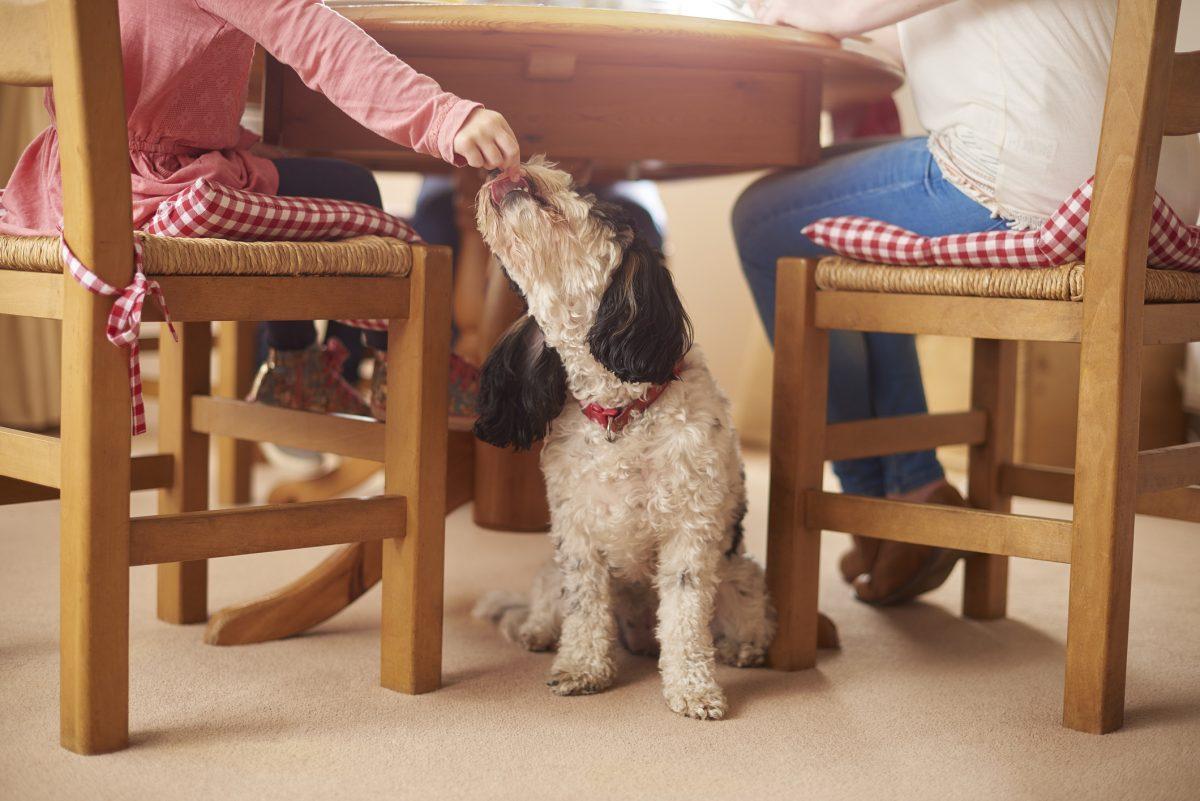 feeding a dog table scraps